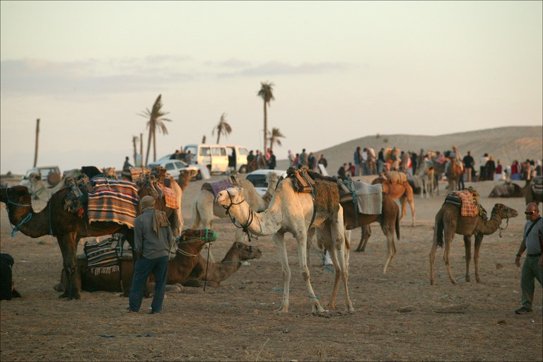 Brilliant   Here Are 15 Stunning Images Of Camel Caravans Crossing Deserts